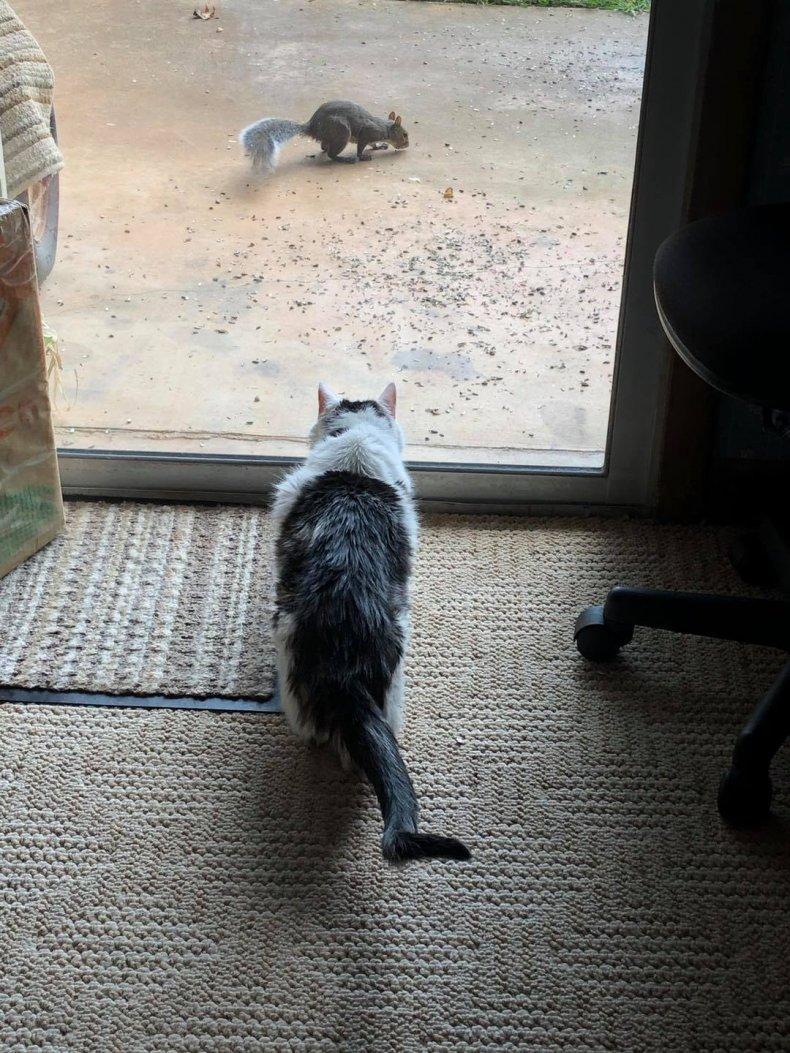 Gus watches a squirrel through the door