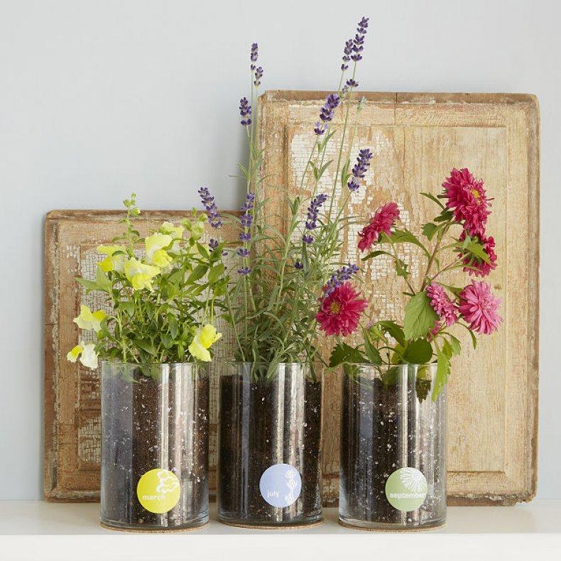 Born to Bloom Birth Month Flower Kit