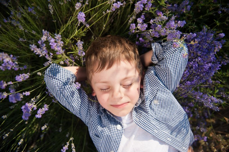 A child laying in a lavender field.