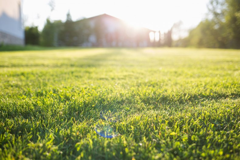 A grass field outside a home.