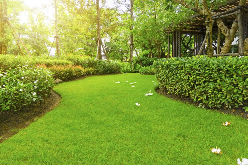 A patch of greenery in a garden.