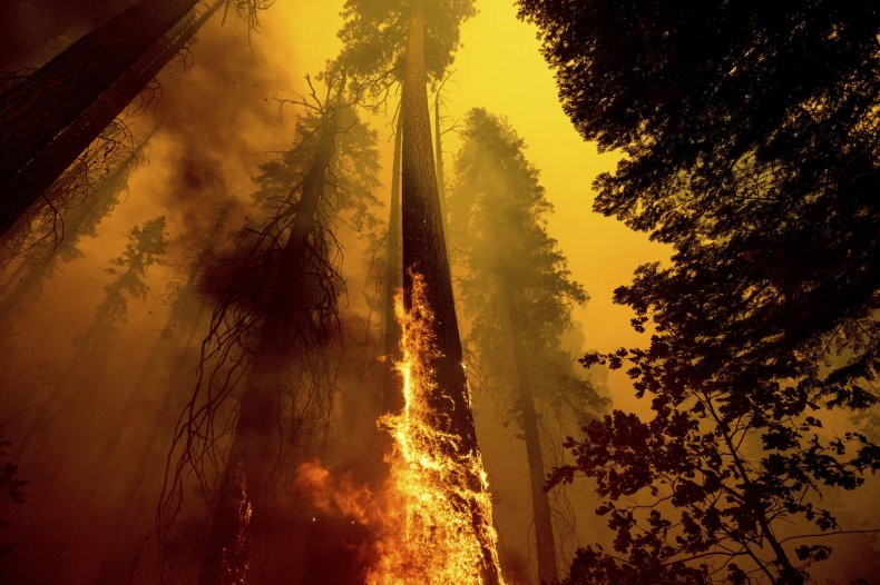 Sequoia trees burned at KNP complex