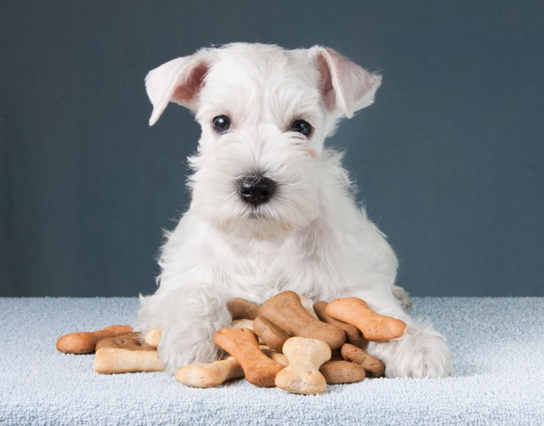 A puppy sitting with dog treats.