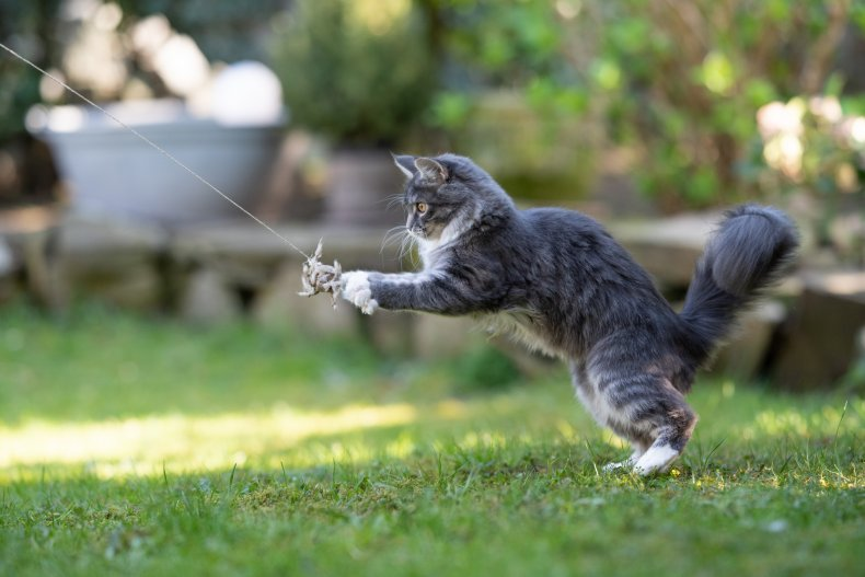 A cat is playing with a toy outside