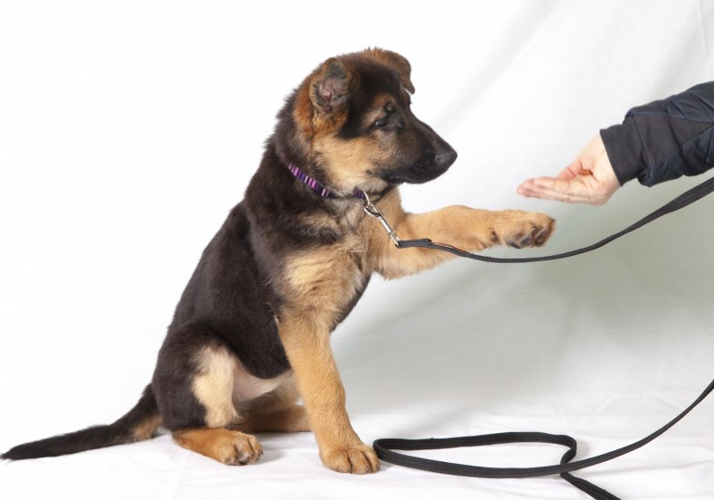 A puppy being trained with a treat.
