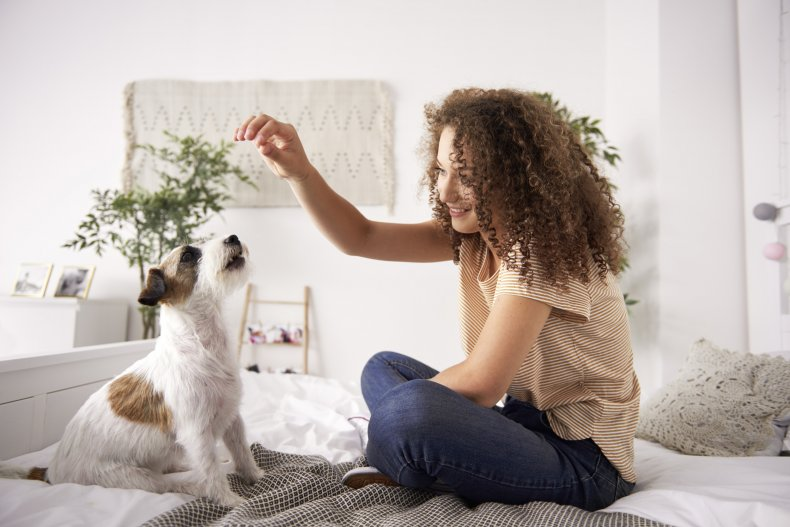 A woman training a dog with treats.