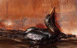 oil-spill-timeline-bird-may-9