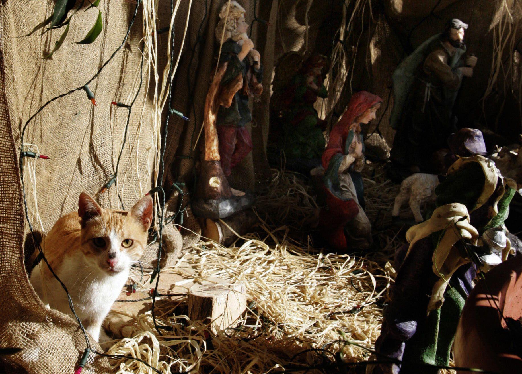Feral Felines Invade Brooklyn Nativity Scene