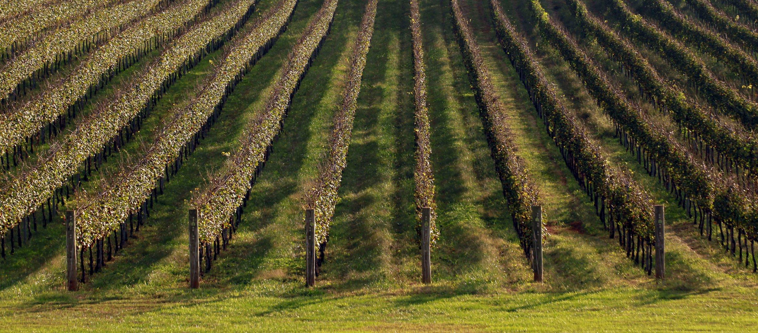 1-10-2013_LS0502_Wine