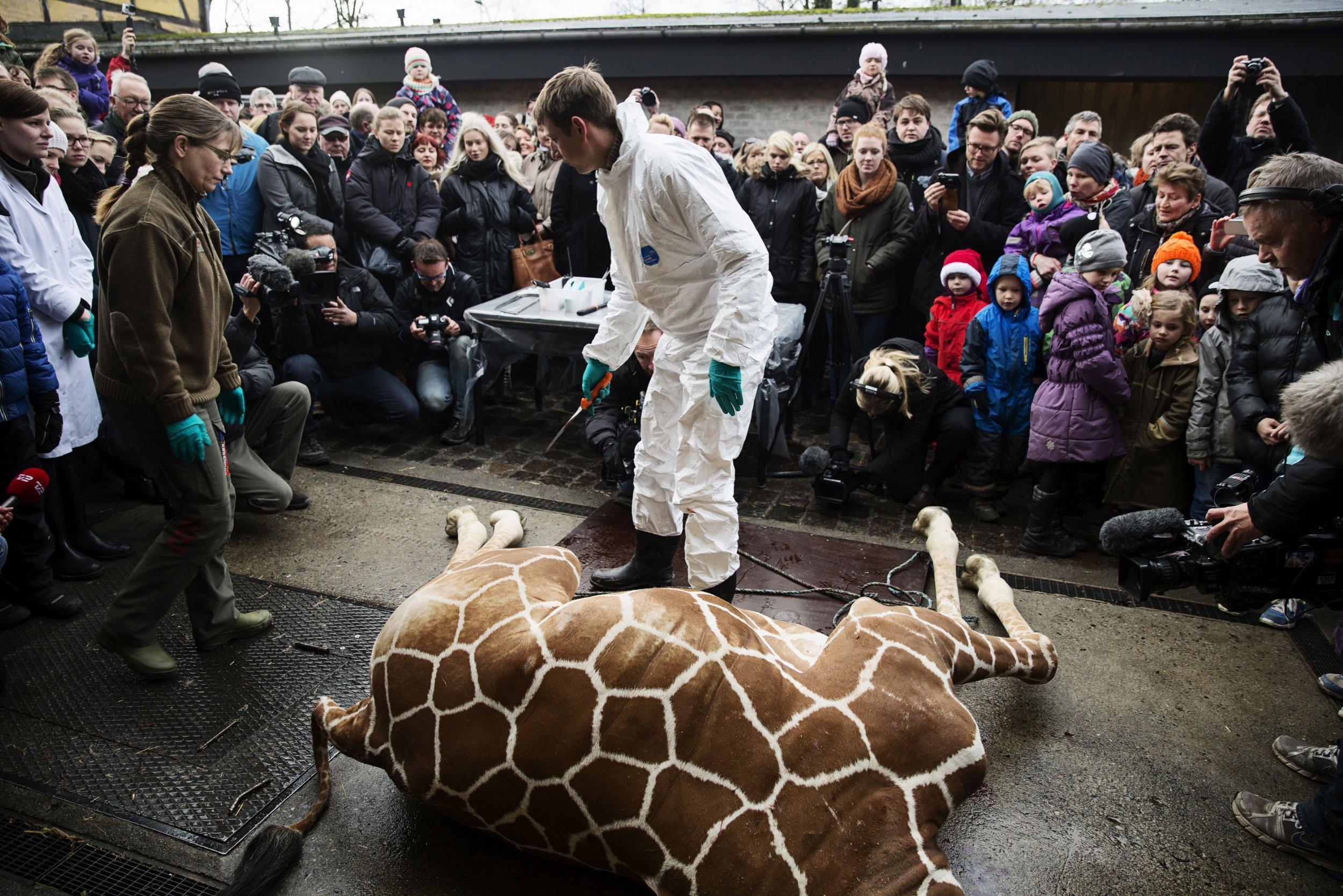 2.10_giraffe_Denmark_01