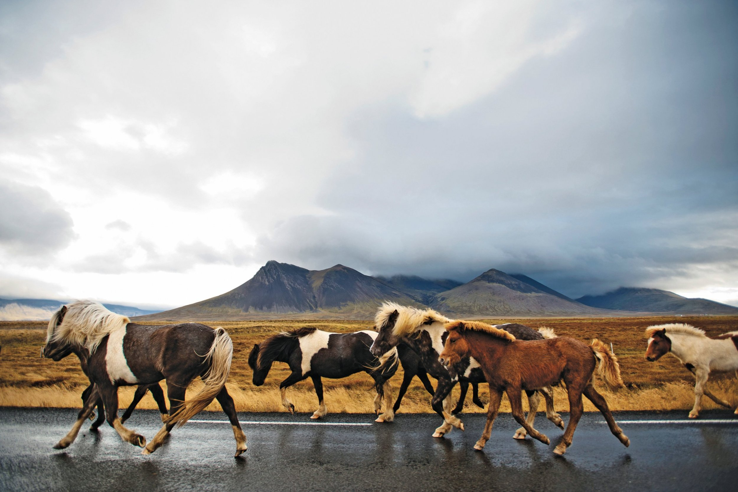 Iceland by Horseback is the Ride of a Lifetime