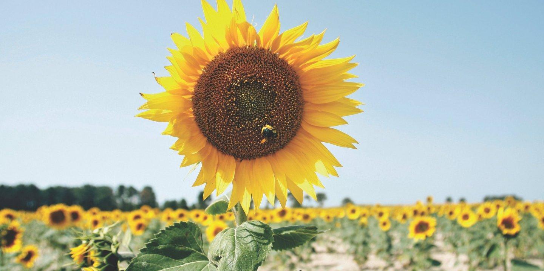 dzieza-nm0721-pollen-allergies-tease