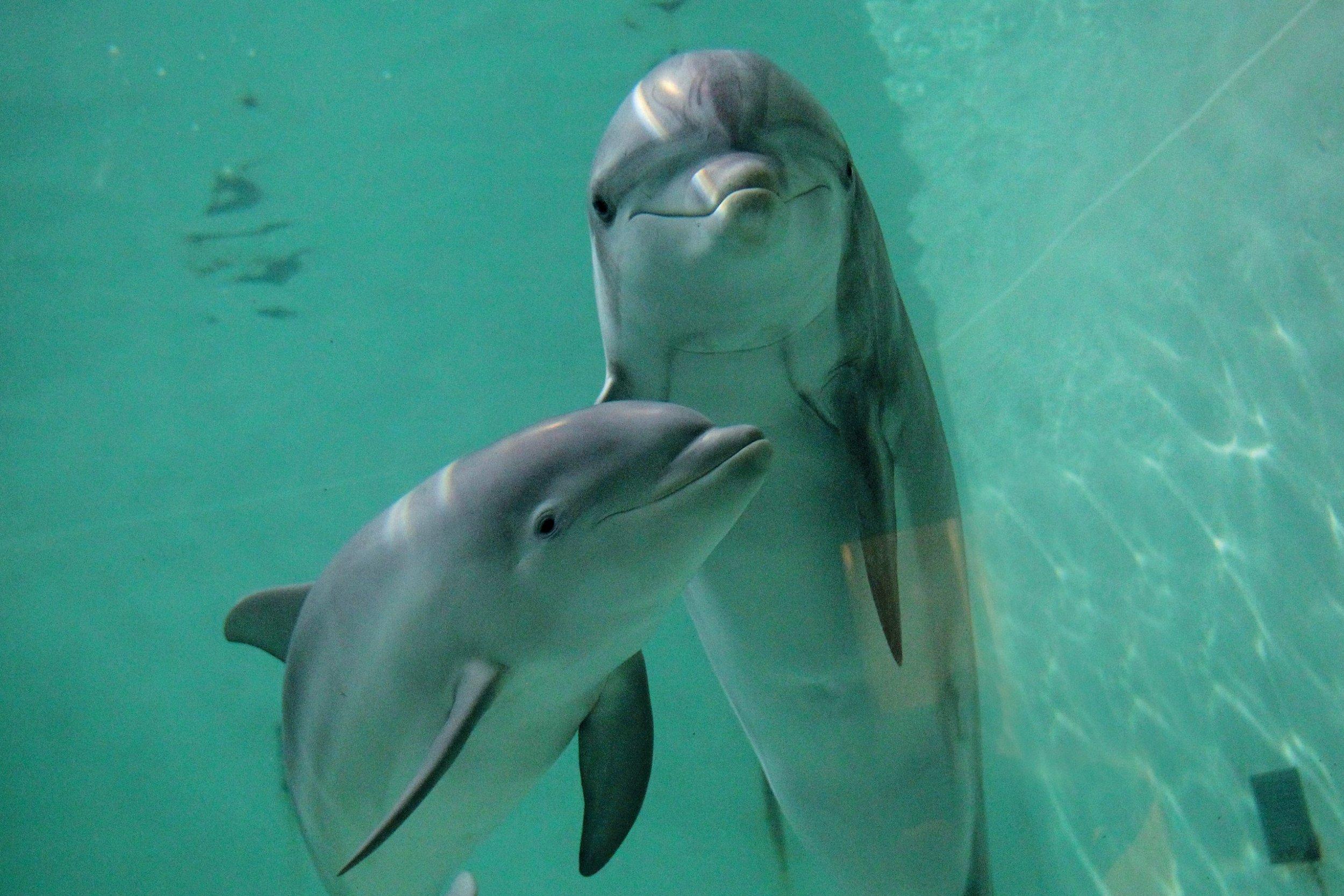130619-dickey-bw0523-dolphins-tease