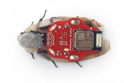 BW bionic bug