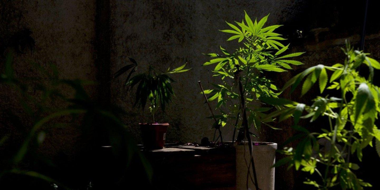 12-13-13_DL0545_Weed