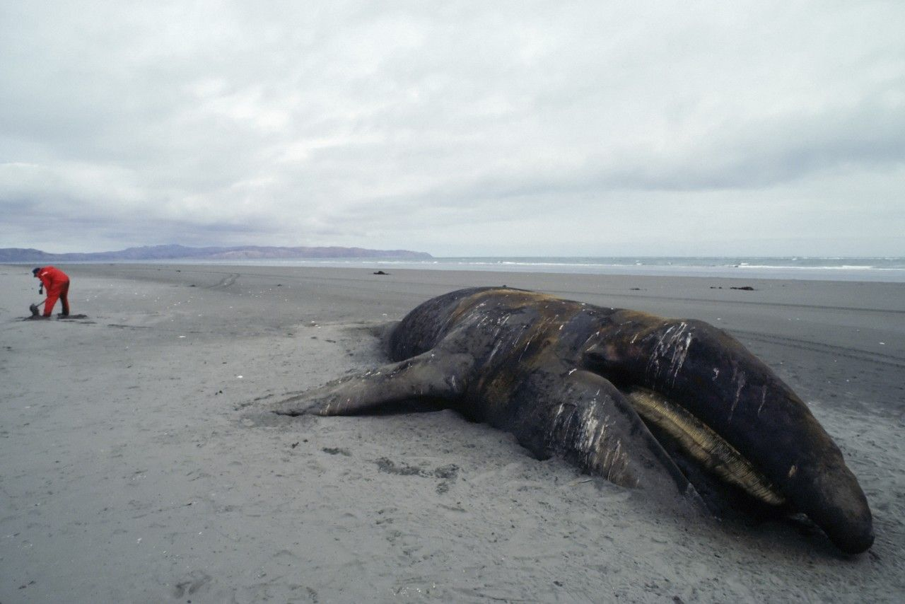 3.28_NW0313_Whales_01