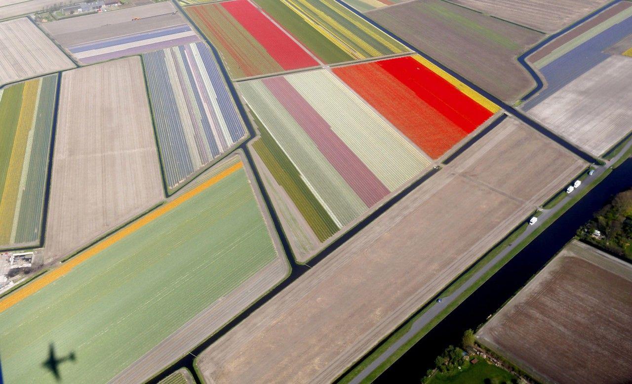 Netherlands in Bloom
