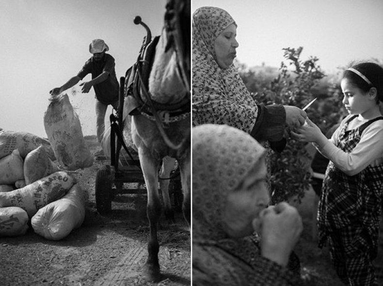 GazaFarming_Franko