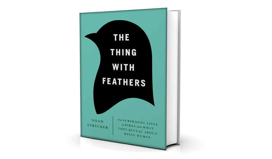 5.16_Feathers_book-2