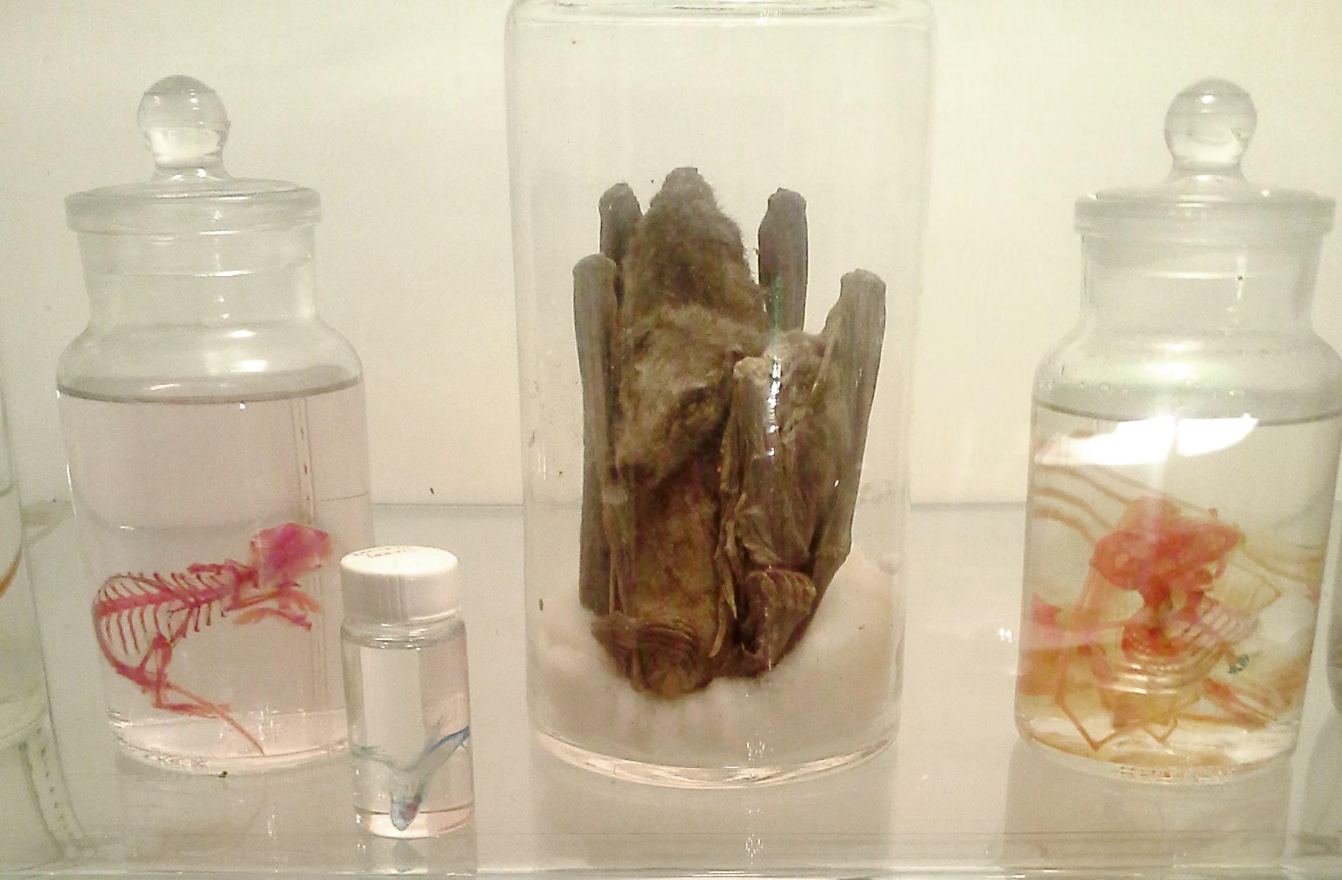 Morbid Anatomy Museum Opens in Brooklyn