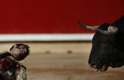 Matador looks at bull during fight