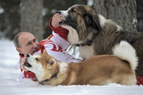 Putin dogs in snow
