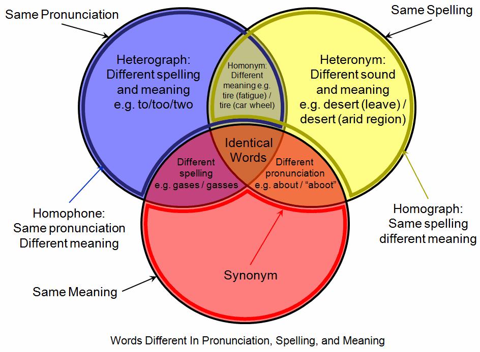 A venn diagram explaining homophones.