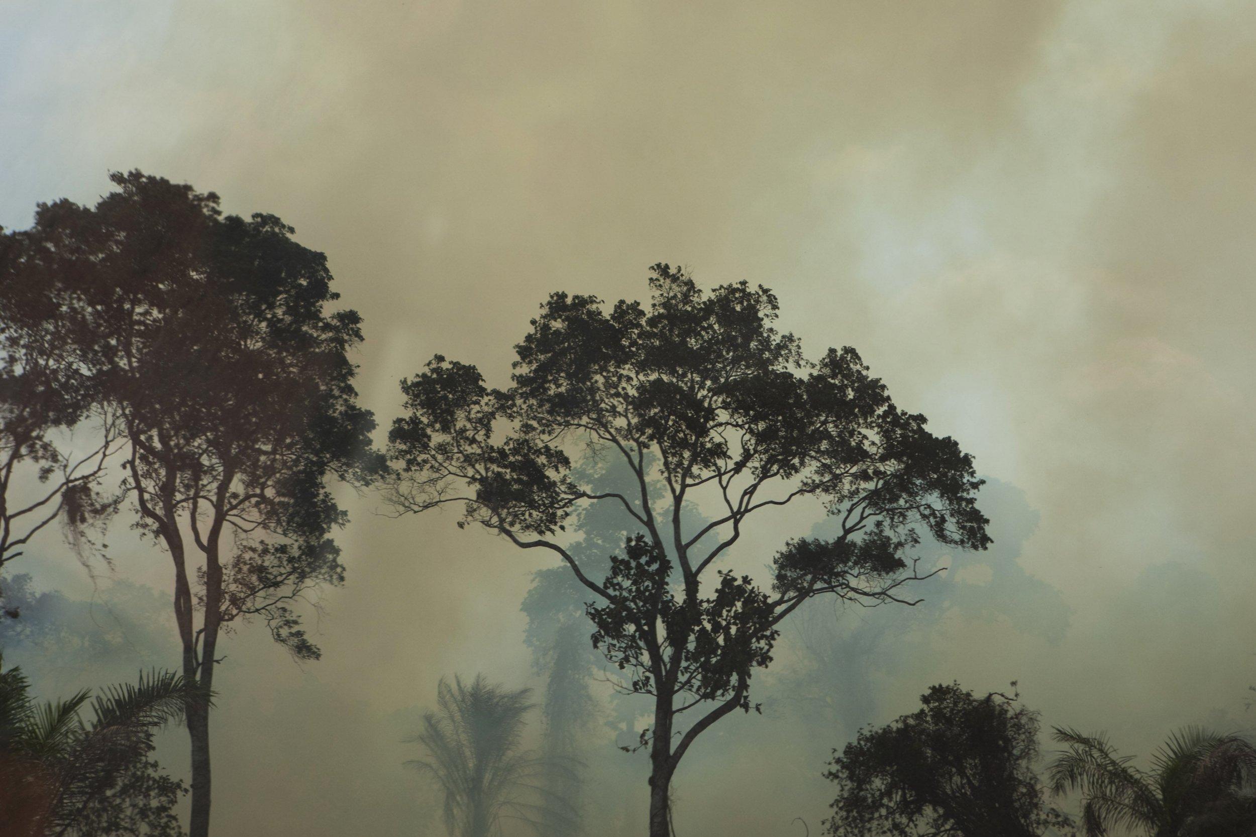burning-forest-sierra-leone