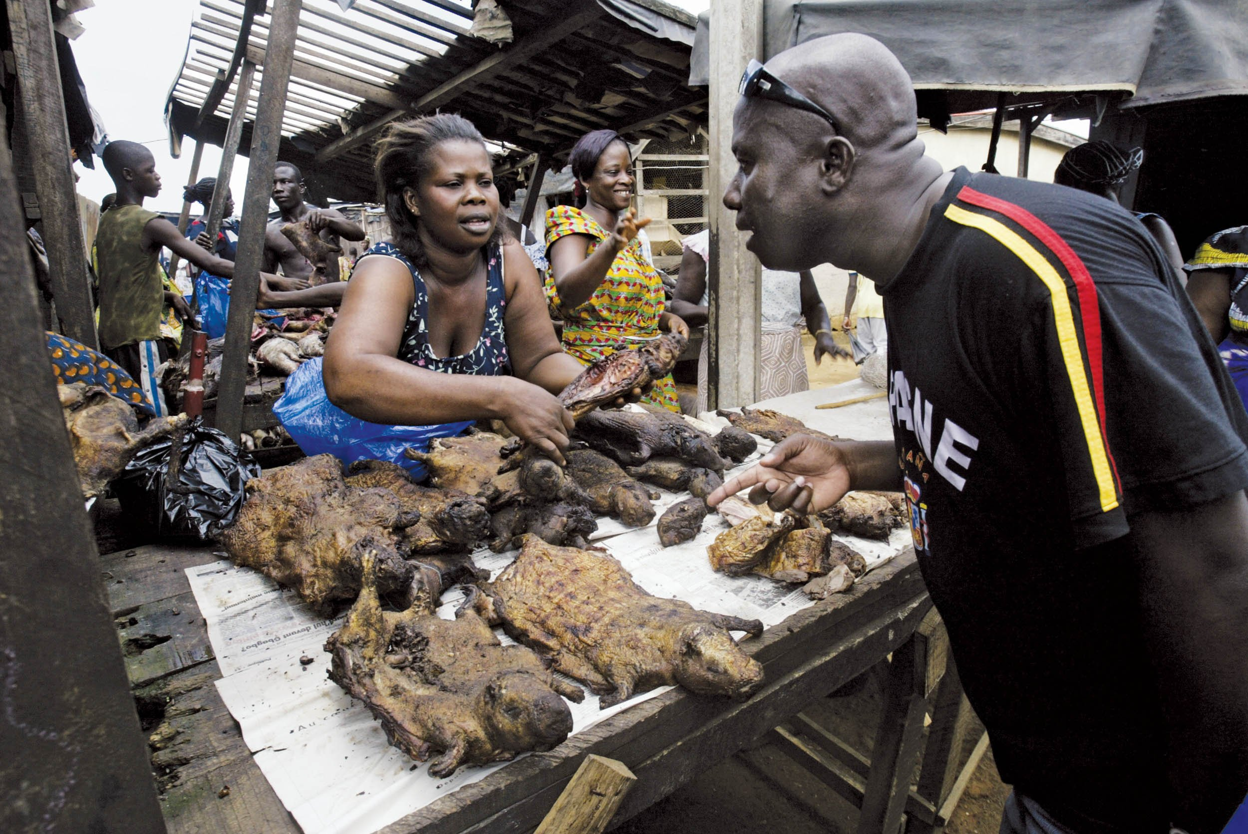 Smuggled Bushmeat Is Ebola S Back Door To America