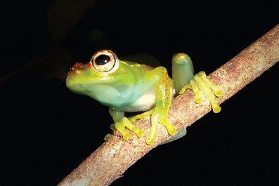 08_18_Frog