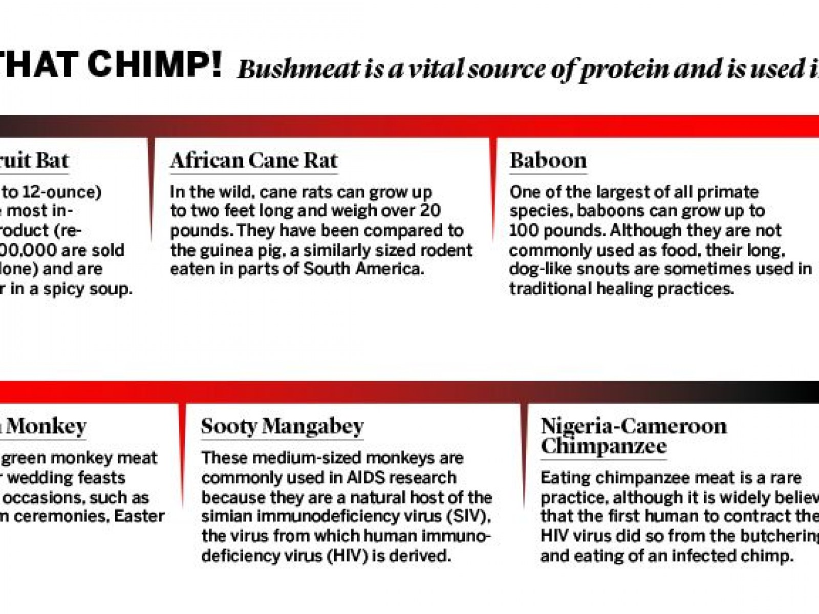 Smuggled Bushmeat Is Ebola's Back Door to America
