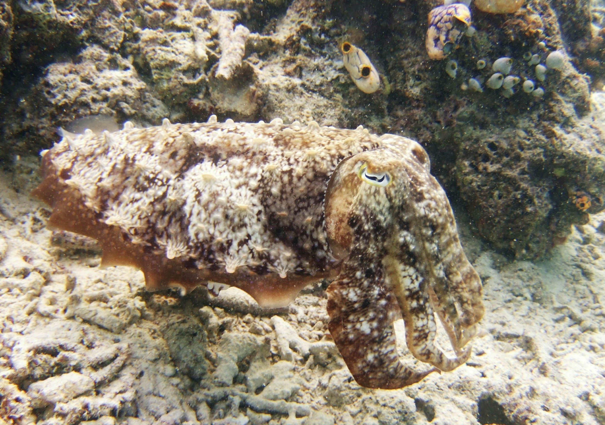 08_19_Cuttlefish