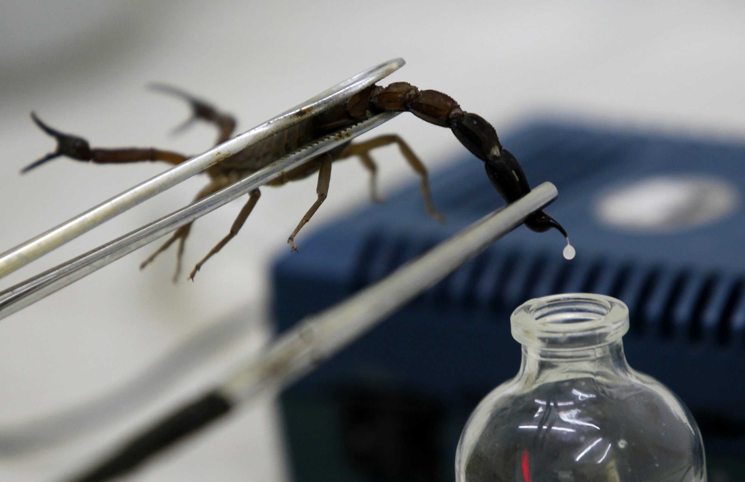 scorpion-venom