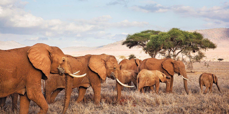 08_29_Elephants_01