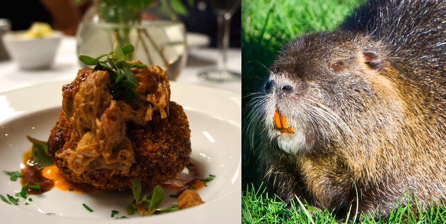 Eating Invasive Species