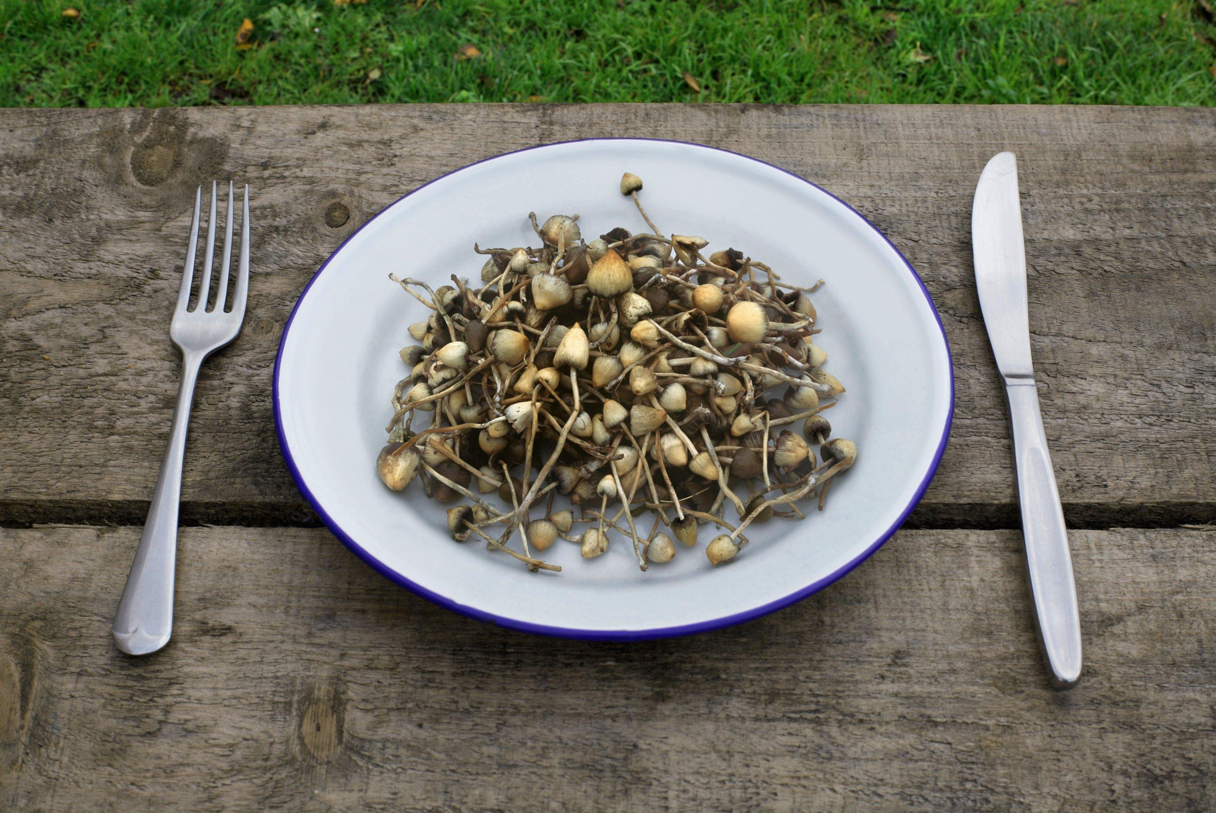 9_11_mushrooms