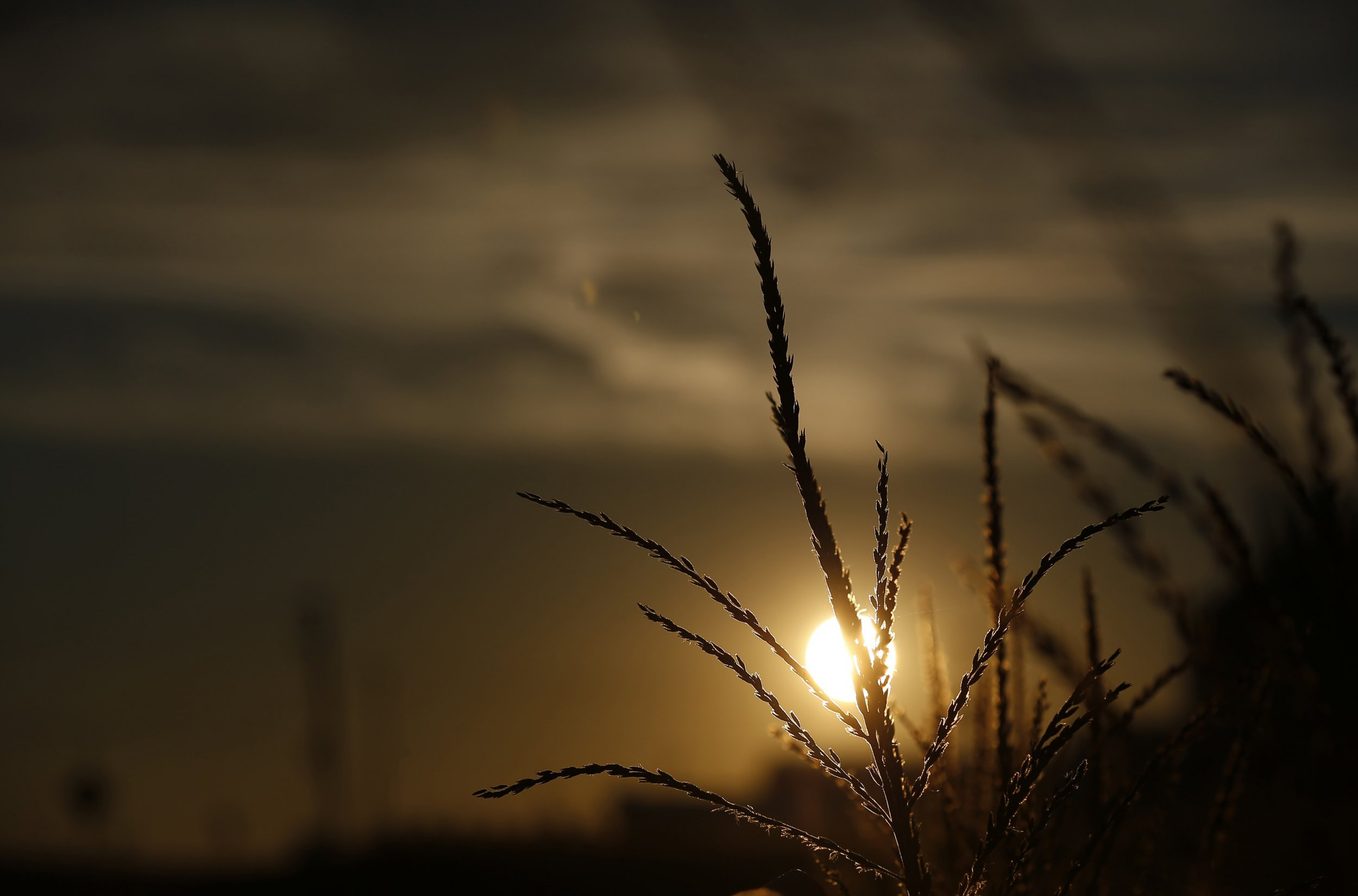 sun-rising-behind-corn-field