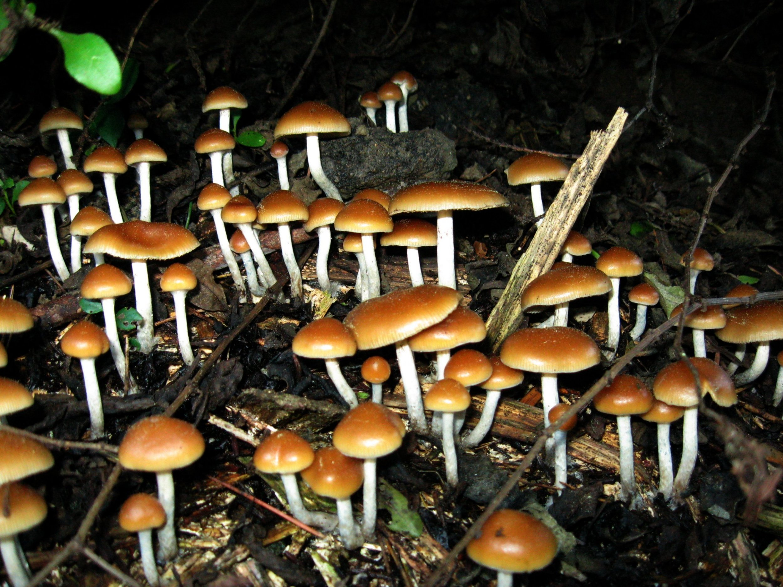 Scientists Discuss Merits of Psychedelics In Medicine