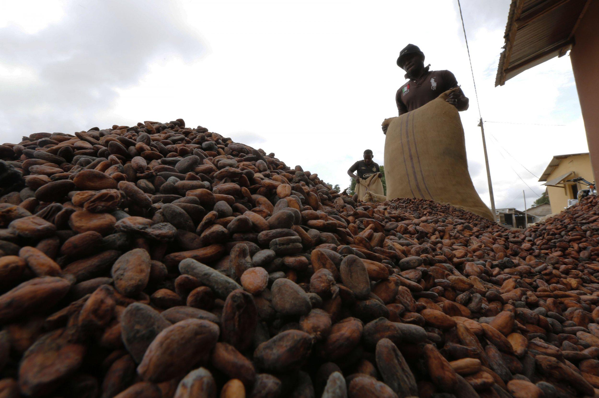 10-15-14 Ebola cocoa
