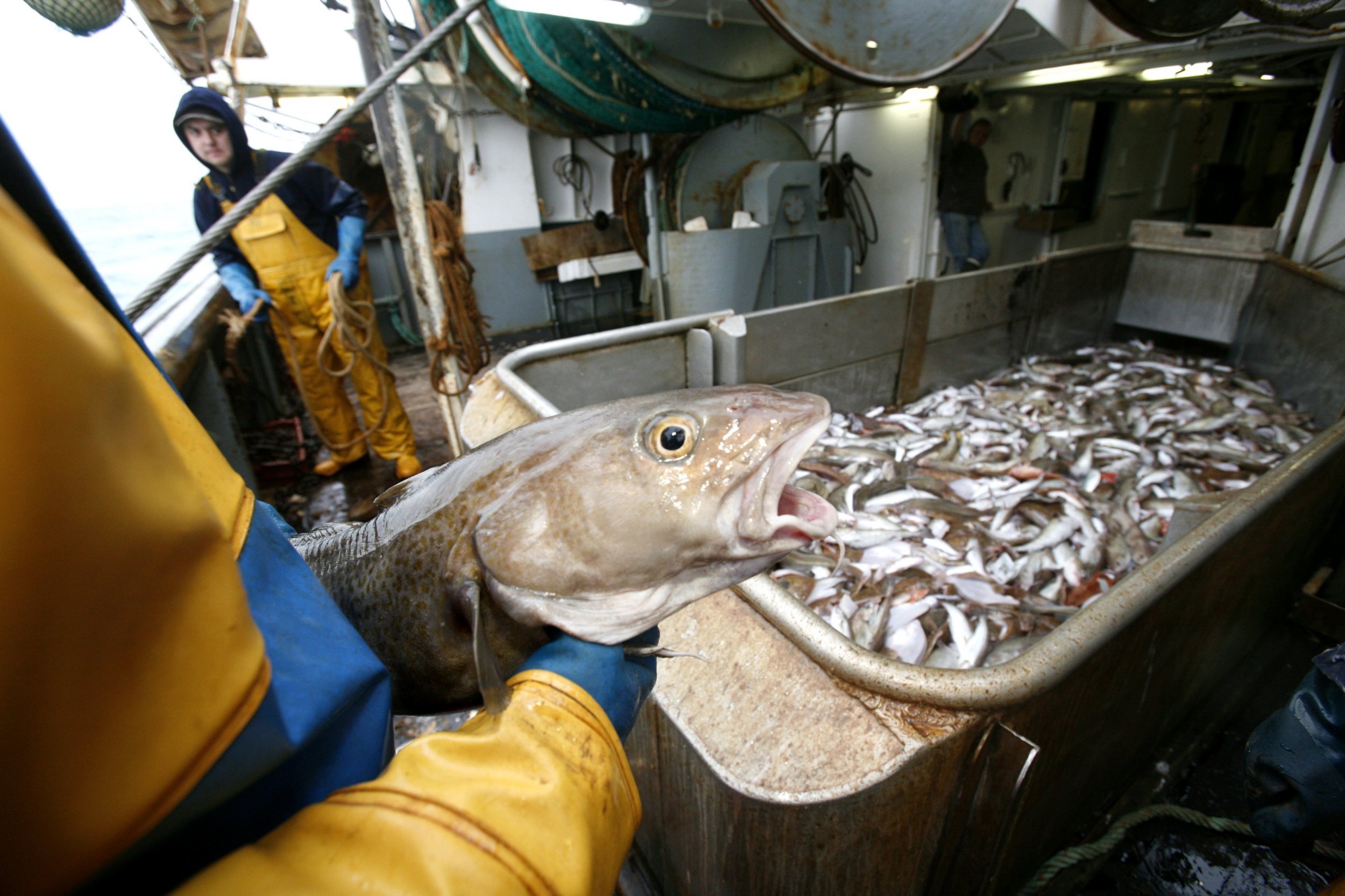 feds close most of northeast to cod fishing