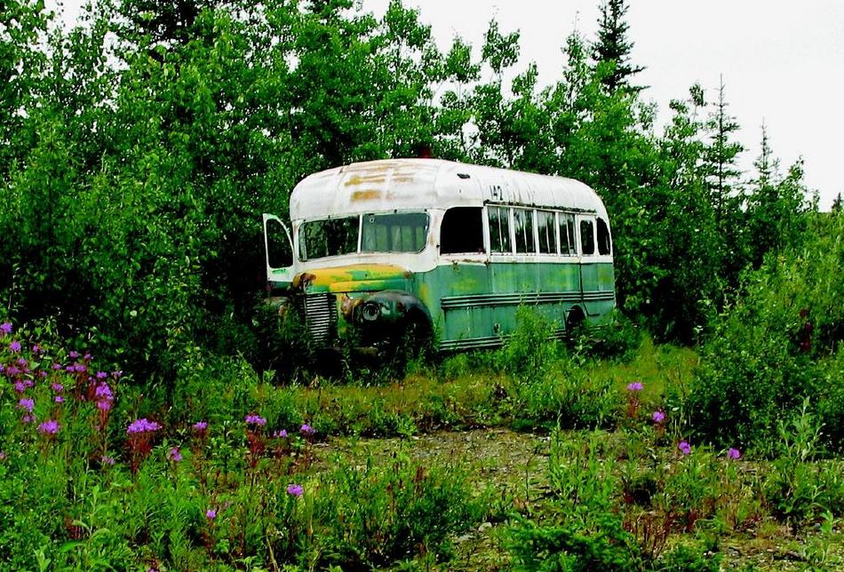 what really drove christopher mccandless into the wild according  bus