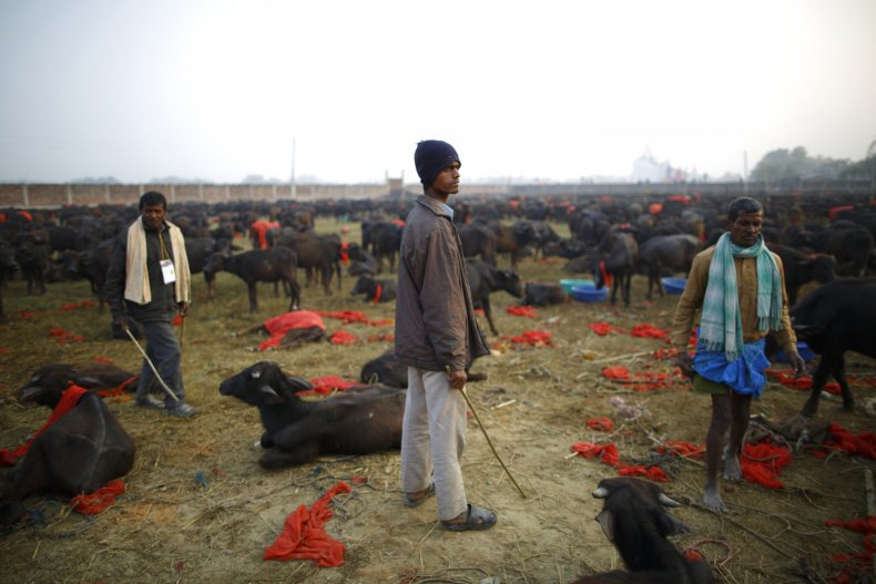 """Gadhimai Mela"" festival"