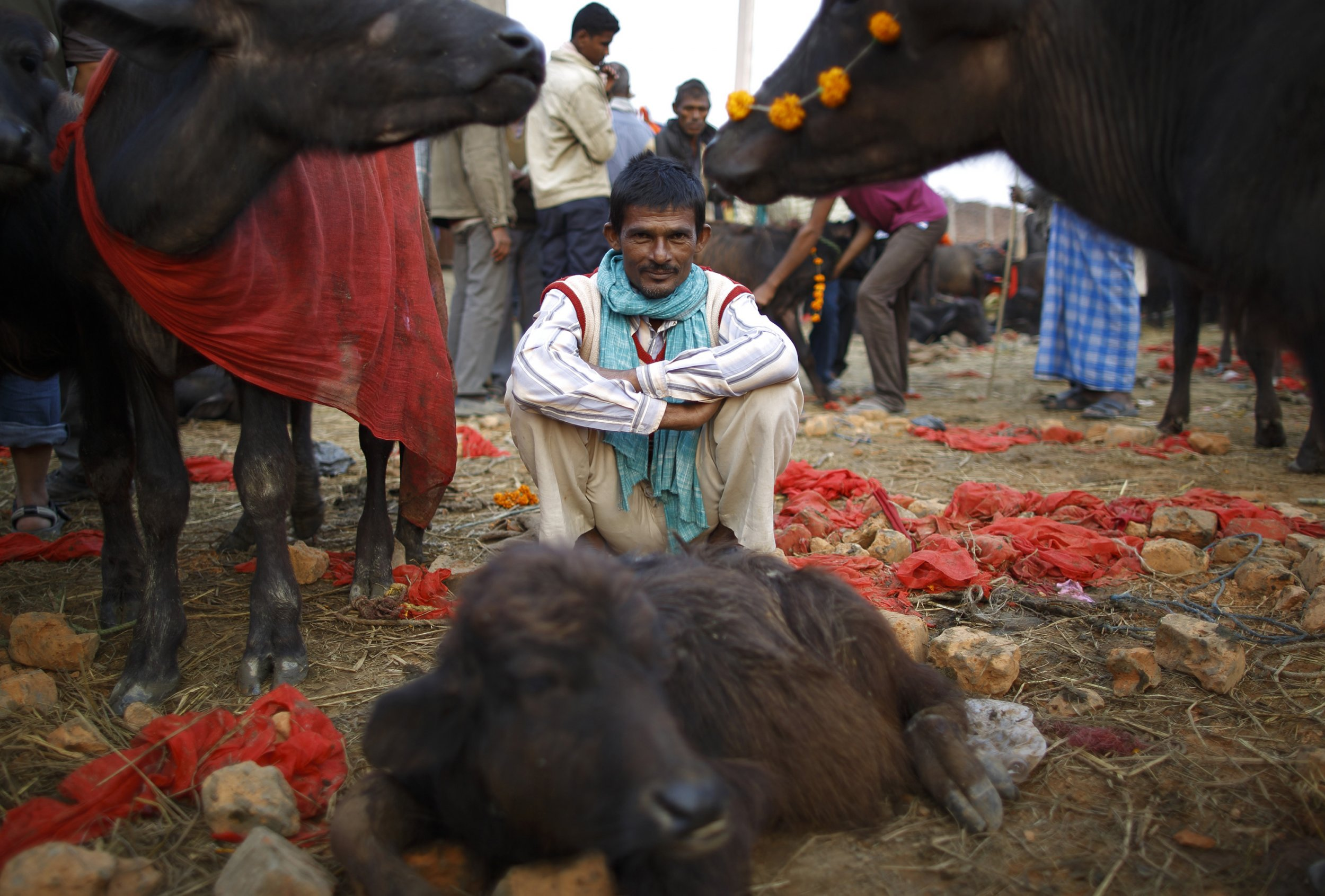 "Gadhimai Mela"" festival"