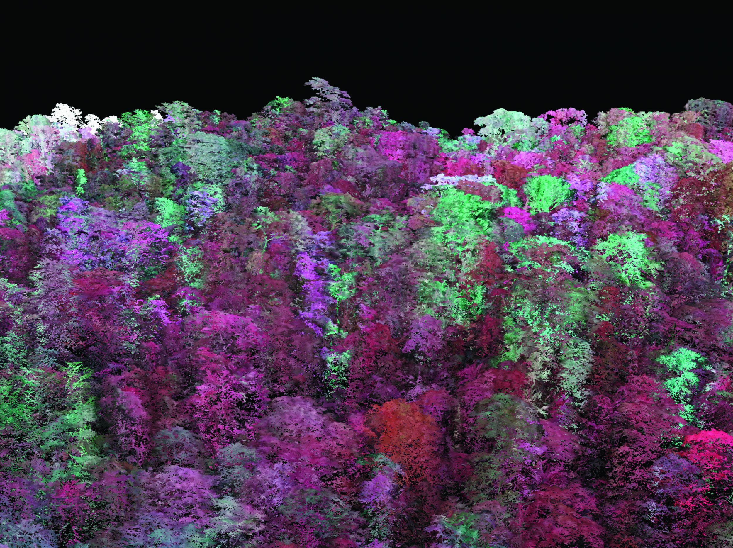 Carbon Imaging of a Forest Canopy