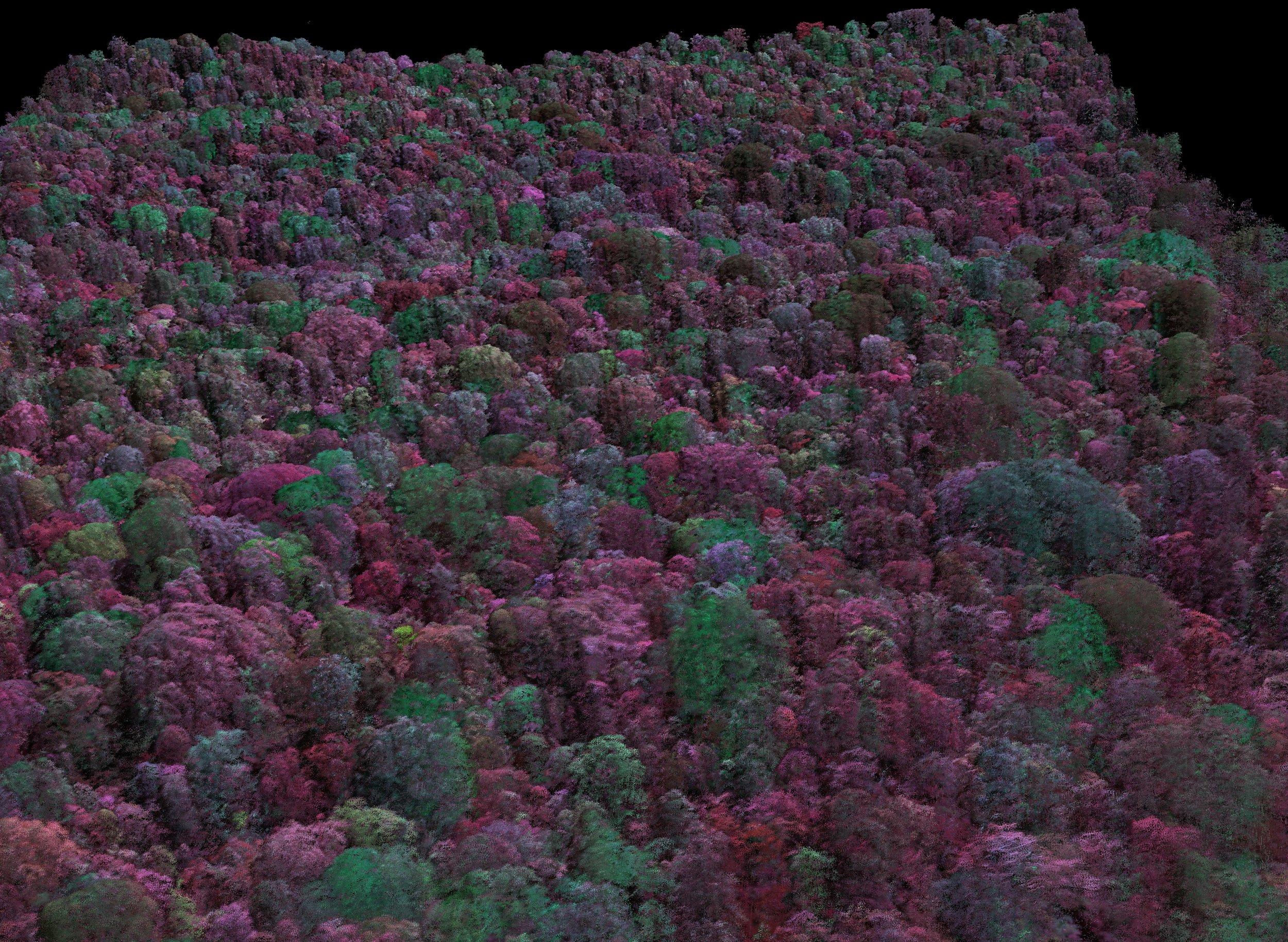 Rainforest in Spectroscopic 3D