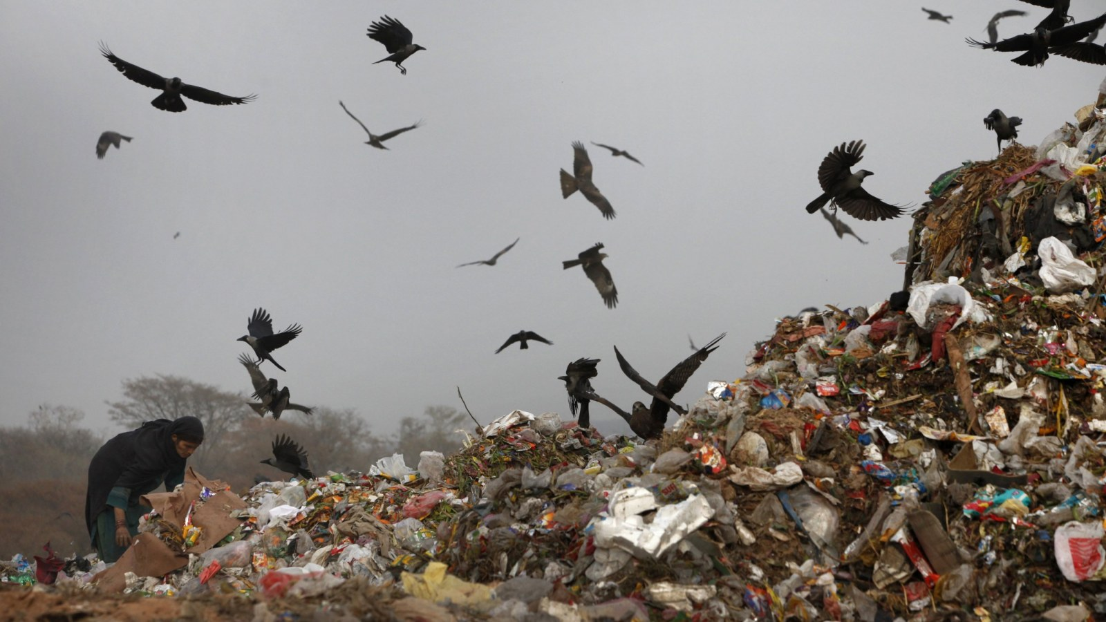 Ecua Garbage Pickup Schedule Christmas 2021 The Plastic Eating Fungi That Could Solve Our Garbage Problem