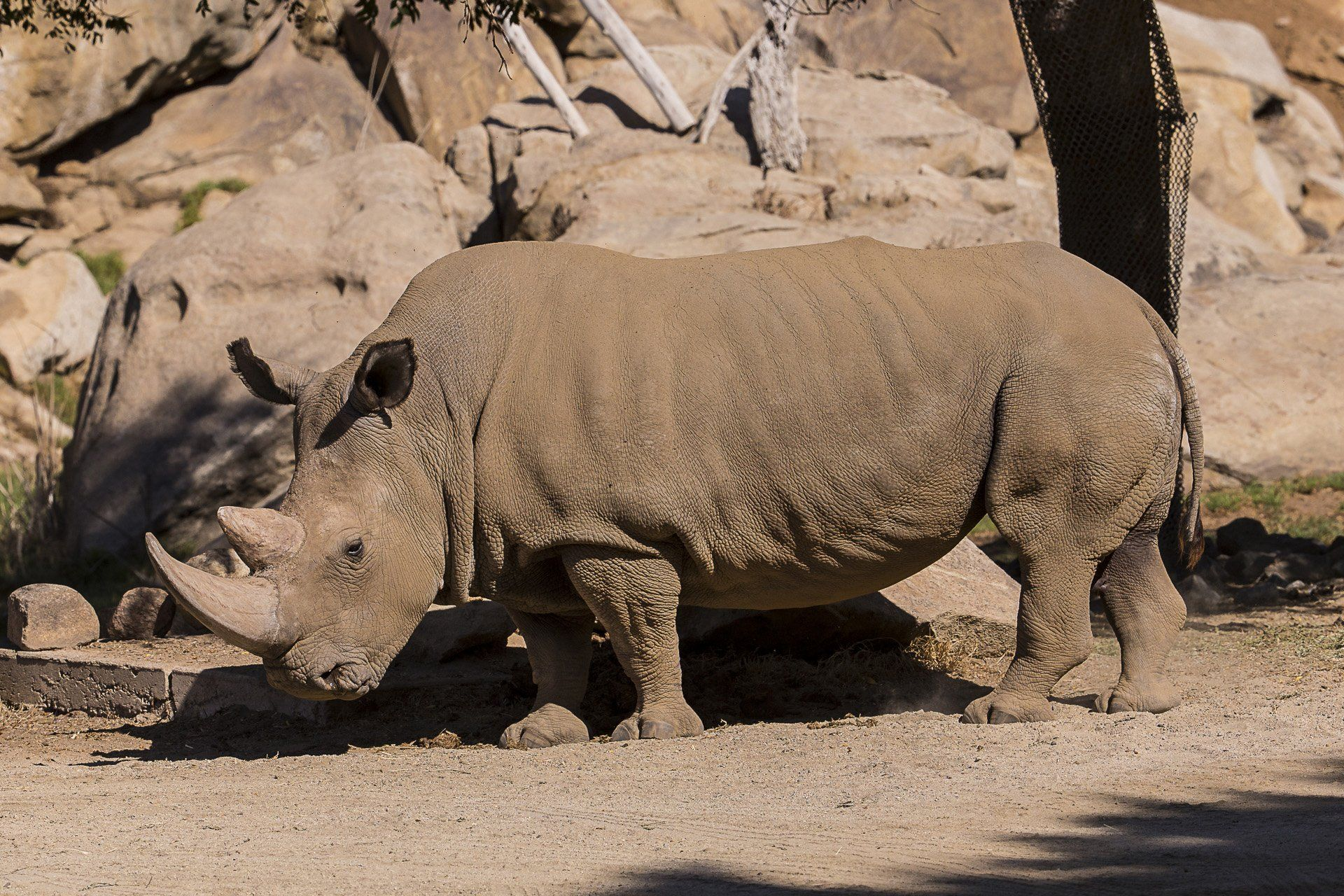 2014-12-15T214817Z_41325307_GM1EACG06Z901_RTRMADP_3_USA-CALIFORNIA-RHINO