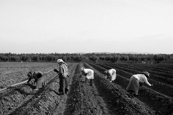 01_tunisia_women_laborers_ARTICLE