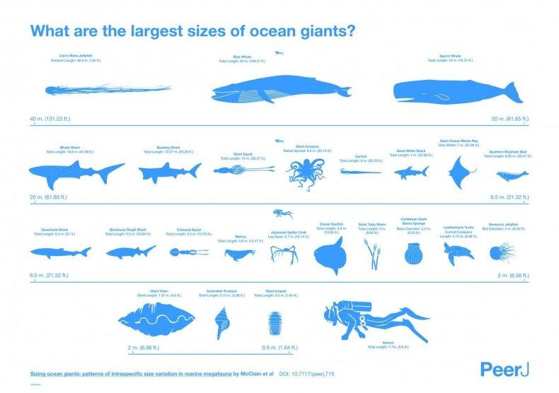 marine-animal-sizes