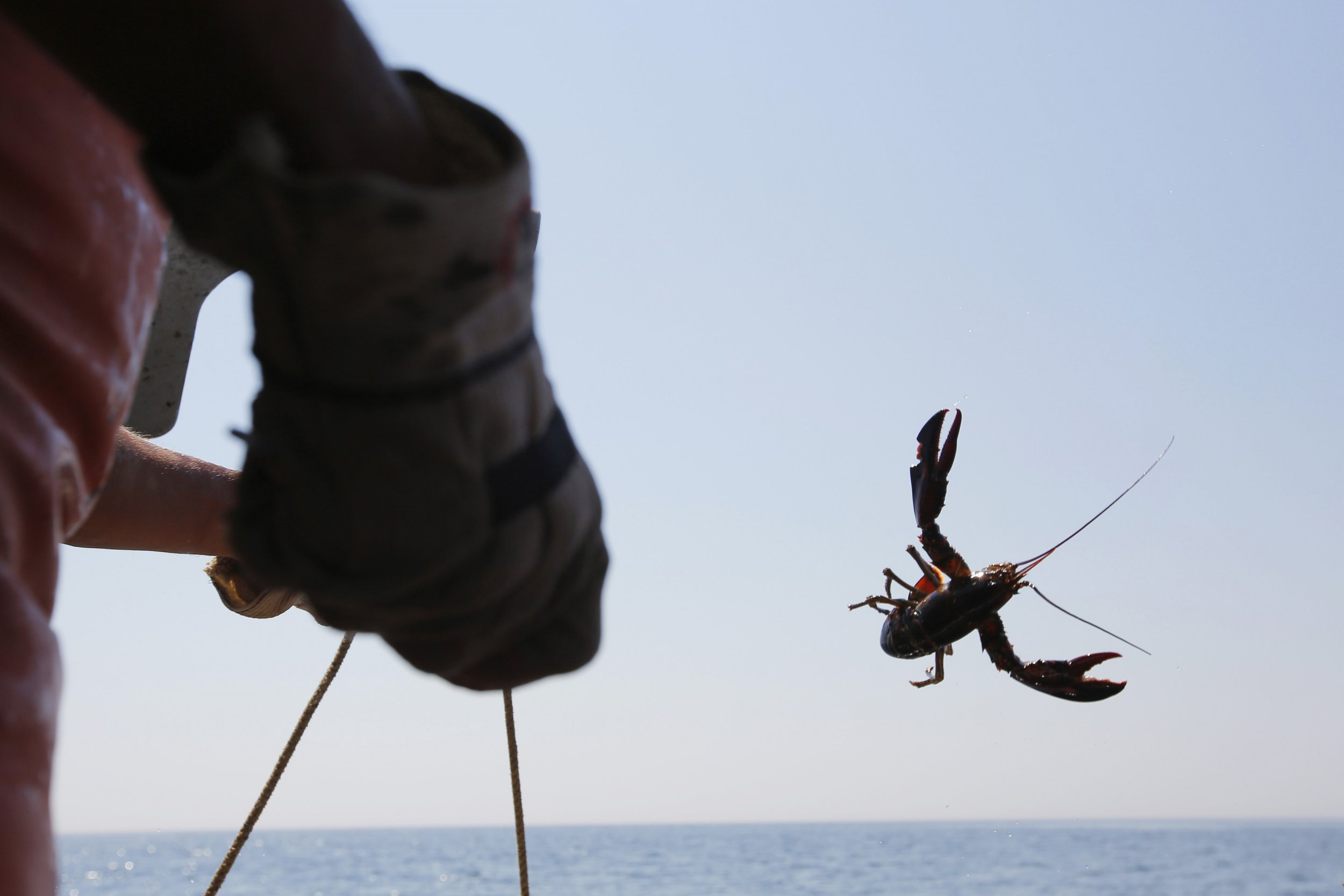 Lobster fishing and climate change